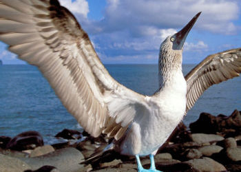 Galapagos-Islands-Travel-350x300