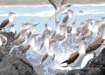 Galapagos-Tour-Packages-Trip